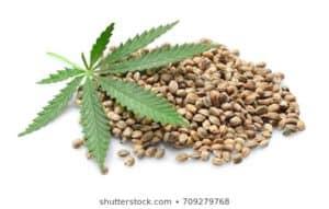 hemp seeds omega 3 omega 6 omega 9.